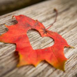 Autumn Leaf with heart 263 x 263